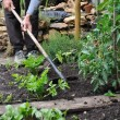 Gardener Hoeing — Stock Photo