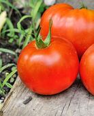 A nice meaty tomato — Stock Photo