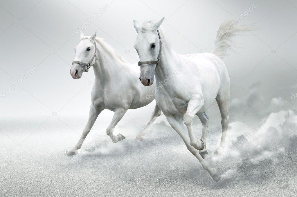 白色马运动中的照片— 照片作者 tanjakrstevska