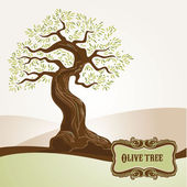 Old olive tree — Stock Vector
