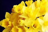 金色的水仙花 — 图库照片