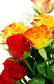 Red and yellow roses — Stock Photo