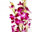 Orchids — Stock Photo #5614640