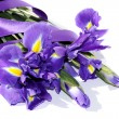 Purple iris — Stock Photo #5747975