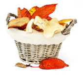 Mushrooms in a wattled basket — Stock Photo