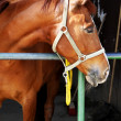 Horse in stable — Stock Photo #5890488
