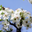 White flowers — Stock Photo #6028777
