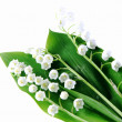 Lily-of-the-valley over white — Zdjęcie stockowe #6028919