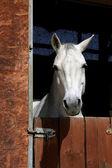 Häst i stallet — Stockfoto