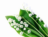 Lily-of-the-valley over white — Stock Photo