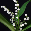 Royalty-Free Stock Photo: Lily-of-the-valley