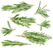 Rosemary collection — Stock Photo