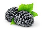 Blackberry — Stock Photo