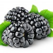 Foto de Stock  : Blackberries