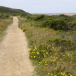 Coastal trail - Stock Photo