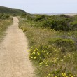 Coastal trail — Stock Photo