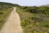 Coastal trail — Stockfoto