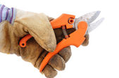 Holding Pruning Shears Using Leather Work Glove — Stock Photo