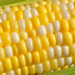 Bi-Color Corn on the Cob — Stock Photo