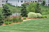 Backyard Landscaping — Stock Photo