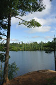 Pine Tree and Remote Wilderness Lake — Stock Photo
