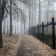 Stock Photo: Fog in a park