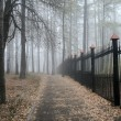 Fog in a park — Stock Photo #5486053