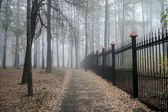 Fog in a park — Stock Photo