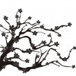 Cherry blossom tree silhouette - Stock Vector