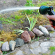 Watering plants — Stockfoto