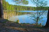 Göl ormanın içinde — Stok fotoğraf