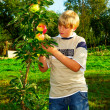 Boy in apple orchard — Stock Photo #6406402
