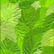 Green Leaves — Foto de Stock