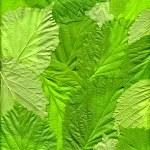 Hojas verdes — Foto de Stock