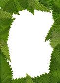 Green nettle Leaves — Stock Photo