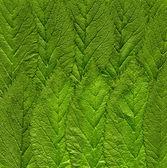 绿色的荨麻叶 — 图库照片