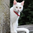 White cat on a wall — Stock Photo