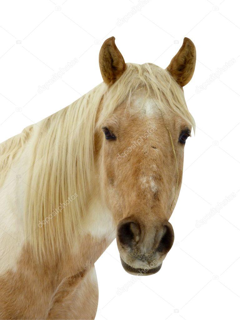 visage de cheval photographie elenarts 6520572. Black Bedroom Furniture Sets. Home Design Ideas