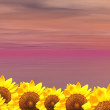 Violet ocean and sunflowers — Stock Photo