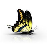 желтая бабочка — Стоковое фото