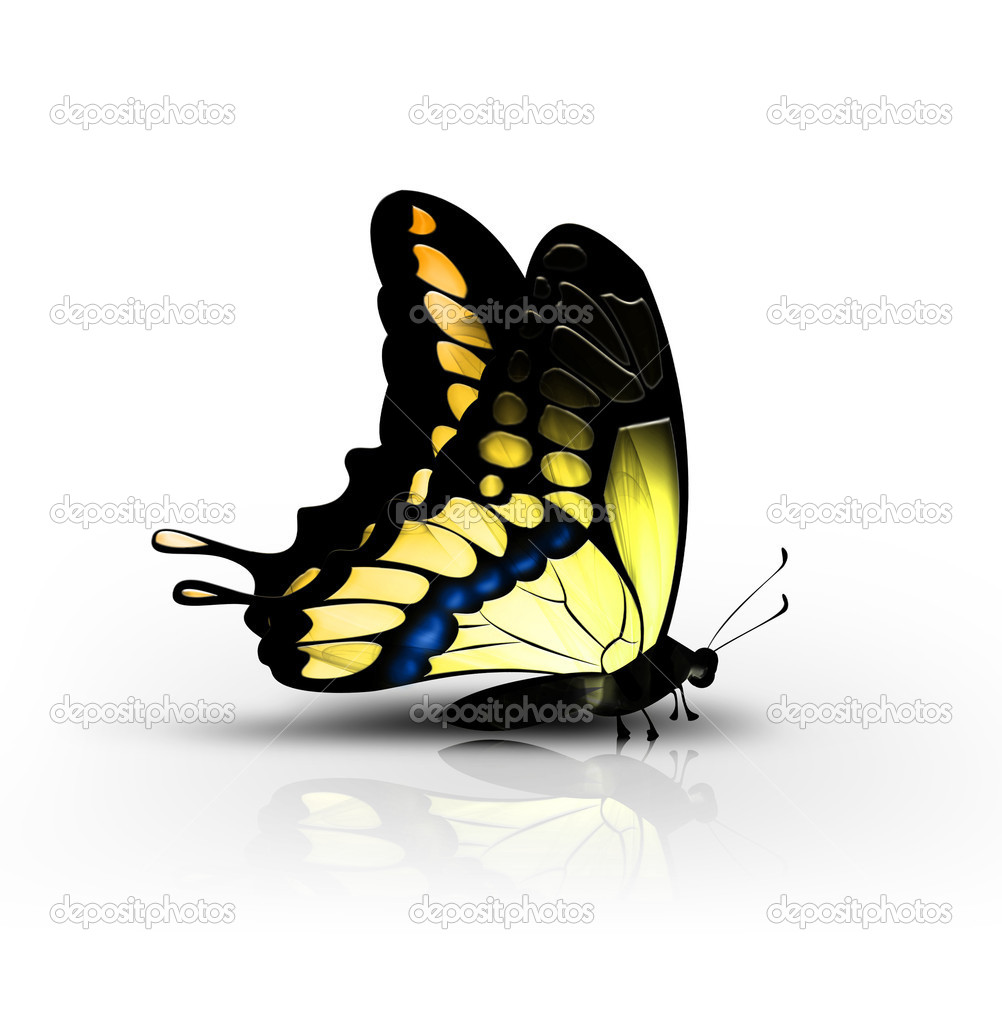 Beautiful yellow butterfly on a white background - side view — Stock Photo #5998029