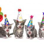 Birthday Song Singing Kittens on White Background — Stock Photo
