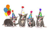 Birthday Song Singing Kittens on White Background — Stock Photo