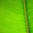 Green leaf texture — Stock Photo #5728541