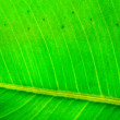 Stock Photo: Green leaf texture