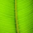 Green leaf texture — Stock Photo #5728547