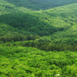 Stock Photo: Aerial view of green forest