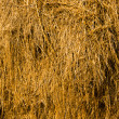 Hay stack - Stock Photo