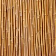 Natural bamboo texture — Stock Photo