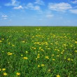 Beautiful meadow full of flowers — Stock fotografie